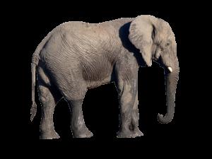 elephant-detoure